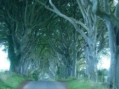 Dark Hedges: Long before it featured in TV series Game Of Thrones,this corridor of beech t...