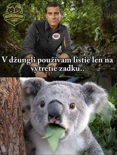 - Koala Funny - The post appeared first on Gag Dad. Koala Meme, Funny Koala, Funny Animals, Man Vs Wild, Funny Jokes, Hilarious, Best Funny Photos, Bear Grylls, Top Funny