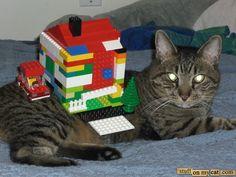 Legos on cat