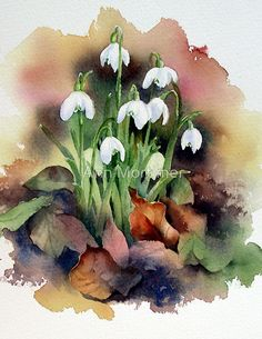 "Watercolour 23×23cm W and N artists watercolours on Saunders Waterford 140not paper. / This is an illustration from my tips and techniques book ""Flowers in the Landscape"" where I talk about how to use masking fluid with watercolour.  Snowdrops are little Winter gifts that bring hope and joy in the cold, dark days of January and February.  They are the harbingers of Spring.  I love them and they are a gift to watercolourists. • Buy this artwork on apparel, hom..."