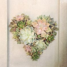 It can't be helped, we're sort of in love with this #designbyterrain #succulent