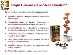 Beneficios del Ganoderma Lucidum en la Salud Ayurveda, Health, Medicine, Vitamins And Minerals, Vitamin E, Spirulina, Cherry Tree, Fungi, Leadership