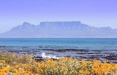 This photo from Western Cape, West is titled 'Table Mountain'. Table Mountain Cape Town, Apartheid Museum, South Afrika, Forest View, Countries Around The World, Most Beautiful Cities, African Animals, Beach Scenes, Landscape Art