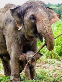 Tagged with elephant, love, cuteness overload, joy, motherhood; Shared by A MOTHER'S LOVE Elephant Pictures, Elephants Photos, Cute Animal Pictures, Nature Animals, Animals And Pets, Funny Animals, Beautiful Creatures, Animals Beautiful, Elephas Maximus