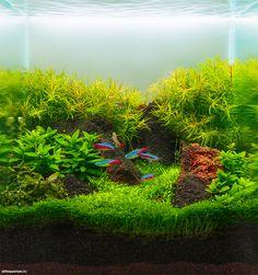 Результаты 1 этапа конкурса аквариумного дизайна Scaper's Tank Contest 2014   Все для аквариума, террариума и пруда