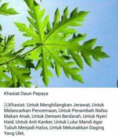 Khasiat Daun Pepaya Natural Medicine, Herbal Medicine, Healthy Habits, Healthy Tips, Health And Nutrition, Health Fitness, Apothecaries, Fruit Plants, Okra
