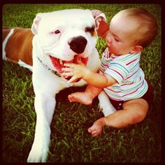 American bulldog and his bff Staffordshire Terriers, American Staffordshire, Bully Breed, American Bulldogs, Bulldog Pics, Pound Puppies, Cuddle Buddy, Bull Dog, Lap Dogs