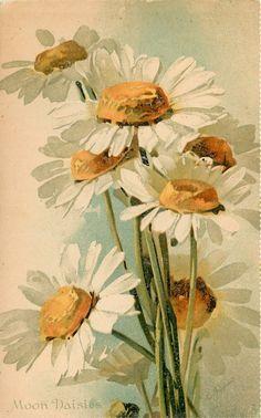 Moon Daisies ~ Vintage Catherine Klein postcard