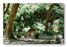 National Hunting Reserve of Mafra