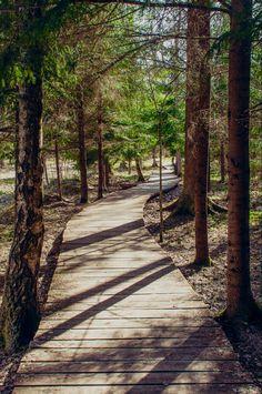 The cognitive path of Dūkštai wood by Fati Dzarajeva (Lithuania)