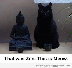 Zen and Meow - Funny cat posing by the Buddha statue like a Zen Master.