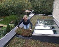 Posez vous-même et simplement une toiture végétalisée extensive ! - Nidagravel - Livios