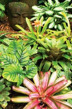 Tropical plants | Provides year-round colour - is easy to maintain and provides a relaxed exotic feel. If you don't live in a natural rainforest - use drought-tolerant plants such as bird of paradise, hibiscus, frangipani, bromeliads, cordylines and draecenas.