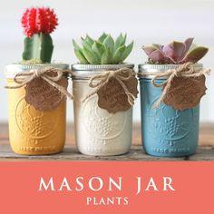 メイソンジャー 多肉植物 サボテン Ball Mason jar メイソンジャー レギュラーマウス 8oz メイソンジャープランツ 植物 ギフト 3個セット