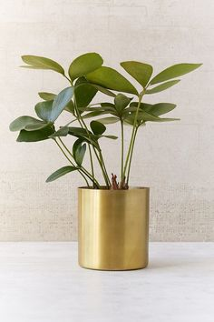 Ideal for both the home & garden, explore Urban Outfitters' collection of plants, planters & terrariums. Choose from a range of plant pots, vases and terrariums. Gold Planter, Metal Planters, Indoor Planters, Indoor Garden, Planter Pots, Home And Garden, Stylish Home Decor, Cheap Home Decor, Unique Garden
