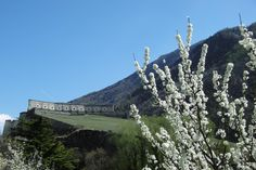 Exilles, mettete dei fiori nei vostri cannoni  #myValsusa 10.04.17 #fotodelgiorno di Giuliano Dolfini