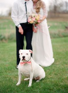 Dog in wedding pictures