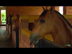 Como se deben Construir las Pesebreras para Caballo- cuadras -TvAgro por... Horses, Youtube, Animals, Club, World, Pole Barn Homes, Decks, Blue Prints, Animales