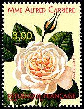 Rose «Mme Alfred Carrière» 1879 Congrès mondial des roses anciennes - Timbre de 1999
