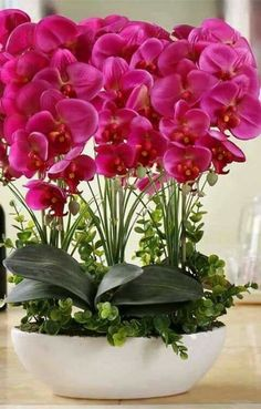 Orchids make a beautiful centerpiece when entertaining: Grow care and maintenance of orchid plants: https://www.houseplant411.com/houseplant/orchids-how-to-grow-care