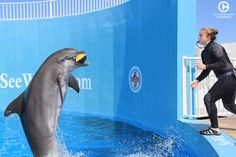 Nicholas the dolphin playing ball with one of his trainers. What a perfect catch!