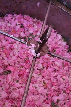 Rose's distillation