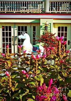 "Garden Pony ( photo by Desiree Paquette) - Dedicated to my friends on the ""Welcome To My Cosy Cottage"" Pinterest group board :-) Thanks for sharing all the great pins girls !"