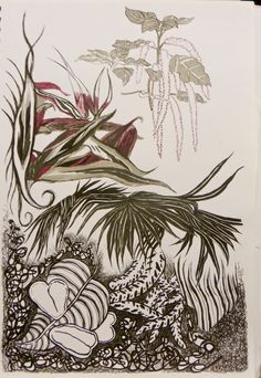 Indian ink drawing from life, Wintergardens Tropical Houses, Auckland, Ink, Indian, Abstract, Drawings, Artwork, Animals, Tropical Homes