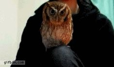 Twenty-eight adorable and awesome owl GIFs that will make you forget that owls are expert predators! Owl Gifs, Funny Animals, Cute Animals, Screech Owl, Every Step You Take, Little Owl, Cute Owl, Just For Fun, Best Funny Pictures