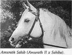 Amurath Sahib (35 Amurath II x Sahiba) - gr, 1932
