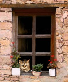 Tuscan Kitten In The Window Art Print by Bob Nolin. All prints are professionally printed, packaged, and shipped within 3 - 4 business days. Choose from multiple sizes and hundreds of frame and mat options. Cute Kittens, Cats And Kittens, Kitty Cats, Cat Window, Window Art, I Love Cats, Crazy Cats, Animals And Pets, Cute Animals