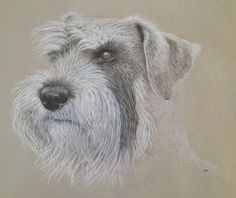 Schnauzer drawing: pet portrait