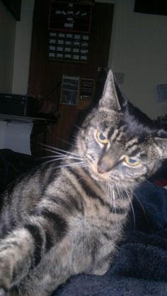 Magic MARTIN Cat | Pawshake