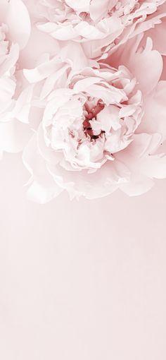 BLCKART ROSE LOVE WALLPAPER VI