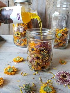 How to Make Calendula. Naturally infused oils with skin health benefits. Natural skin care is easy and better for your skin. Healing Herbs, Medicinal Plants, Natural Healing, Natural Health Tips, Natural Foods, Natural Skin Care, Oil Cleansing Method, Calendula Oil, Calendula Benefits