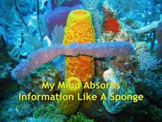 File:Sponges in Caribbean Sea, Cayman Islands. Cayman Islands, Purple Vase, Coral Bleaching, Coral Walls, Sea Sponge, Animal Species, Caribbean Sea, Animals, Colors