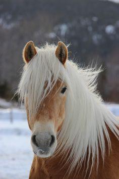 Любовь Лошадей, Милые Животные, Домашние Питомцы, Naturaleza, Картины, Рисунки, Белые Лошади