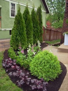 Fence landscape -arborvitae in center and somewhat symmetrical design either side.  Bring in knockout roses instead of boxwood?  Barberry instead of ivy geranium?