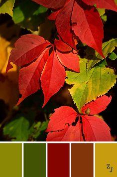 Colour Palette Autumn, Color Palette For Home, Colour Pallette, Yarn Color Combinations, Warm Color Schemes, Warm Colors, Color Balance, Design Seeds, Color Swatches