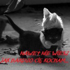 serwis randkowy kocham koty salem lub szybkie randki