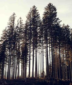 Forest. Trees.