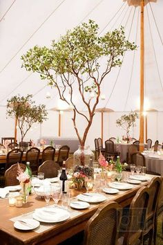 wedding tent decoration ideas with trees                              …