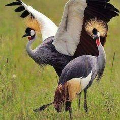 Tanzania Birding Tours + Great Bird Watching Holiday For Superb Wildlife Kinds Of Birds, All Birds, Love Birds, Angry Birds, Pretty Birds, Beautiful Birds, Animals Beautiful, Exotic Birds, Colorful Birds