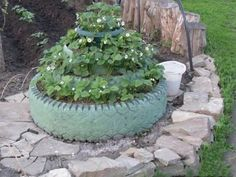 Recycled tires used to make tiered strawberry bed.