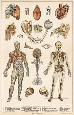 I absolutely A It's my favorite class. The human body is fascinating.