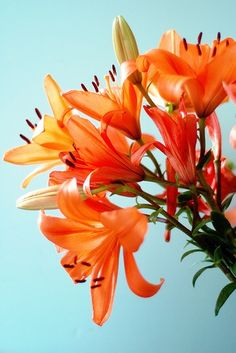 aqua and orange -- colour shades to inspire art, design or new fused glass goodies at Latch Farm Studios www.latchfarmstud...