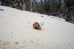 This Single Photo of a Hermit Crab Illustrates the Sad Reality of Plastic Pollution