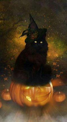 Cat's Halloween.