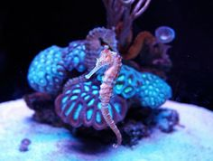 Seahorse | Flickr - Photo Sharing!