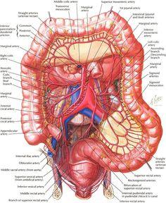 Diagram of the human body internal organs nursing pinterest more information more information 16 many internal organs ccuart Choice Image